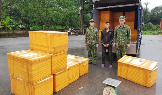 Quảng Ninh: Bắt vụ vận chuyển 500kg cá tầm nhập lậu