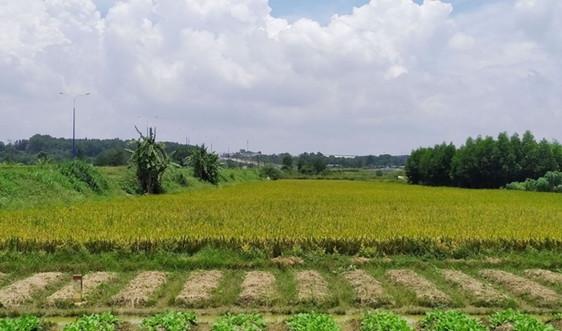 Chuyển mục đích sử dụng hơn 81 ha đất tại Long An