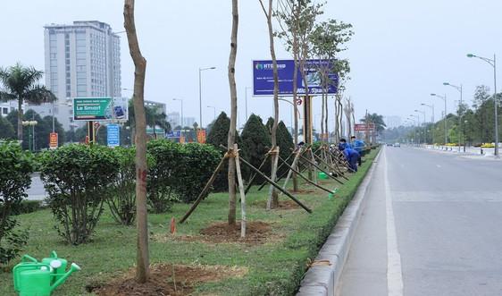 Thanh Hóa: Quản lý cây xanh đô thị để bảo vệ môi trường