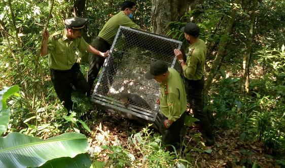 Huế: Thả vọoc chà vá chân nâu về môi trường tự nhiên