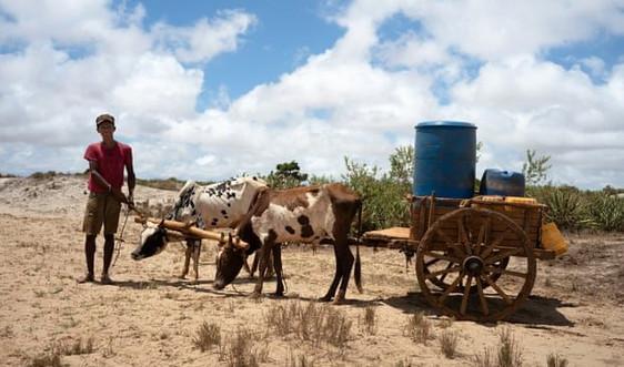 Hơn 1 triệu người Madagascar đối mặt nạn đói do hạn hán nghiêm trọng