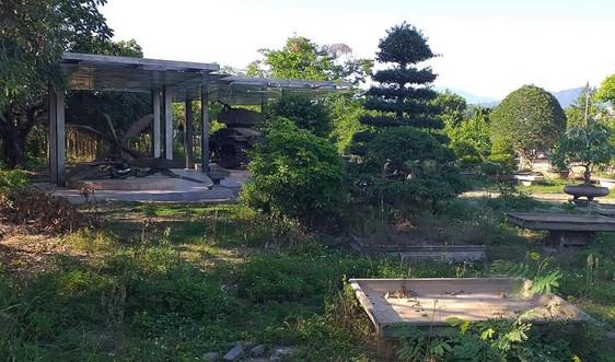 Điện Biên: Đất di tích đặc biệt quốc gia cho thuê nhếch nhác, bẩn thỉu, cỏ mọc um tùm