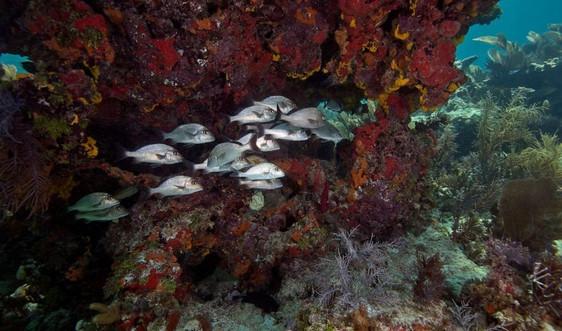 Các rạn san hô có thể dừng phát triển trong 10 năm tới do biến đổi khí hậu