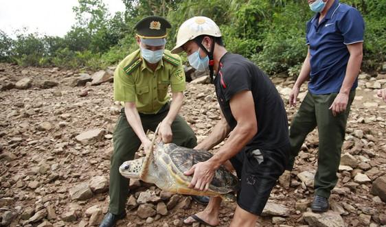 Quảng Ninh: Thả cá thể rùa biển nặng 22kg về môi trường tự nhiên