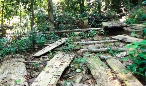 Quảng Ngãi: Chặt phá rừng trái phép, 3 cá nhân bị xử phạt 250 triệu