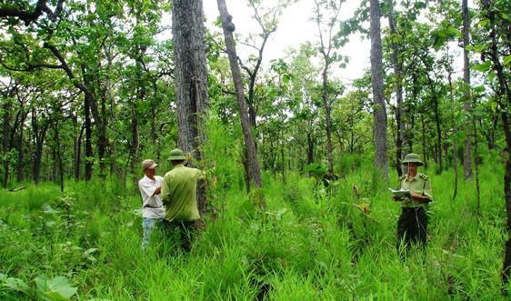 Hà Nội: Đồng bộ các giải pháp bảo vệ rừng
