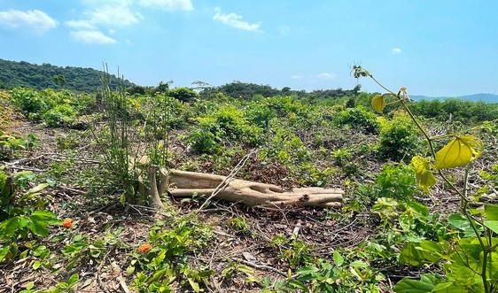 """Vụ """"Rừng phòng hộ hồ Rào Đá bị chặt phá tại Quảng Bình"""": Đã xác định được chủ rừng"""