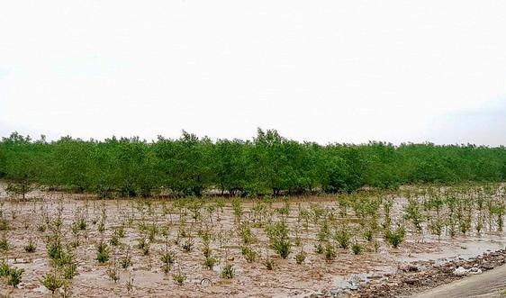 Thanh Hóa: Trồng mới 24,5 ha rừng ngập mặn