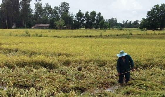 Ban hành Quy chế hoạt động của Hội đồng thẩm định chuyển mục đích sử dụng đất trồng lúa, đất rừng