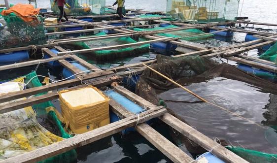 Khuyến khích nuôi biển quy mô công nghiệp bền vững
