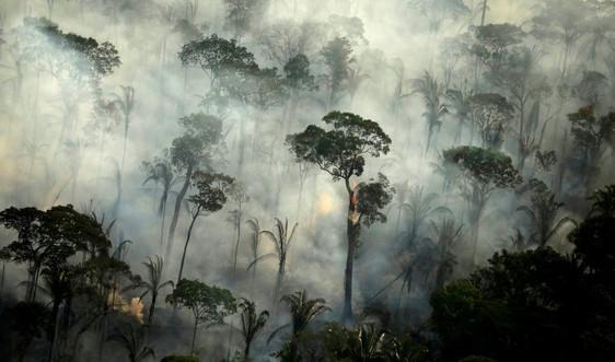 Cảnh báo cháy rừng nghiêm trọng tại Amazon và Pantanal ở Brazil