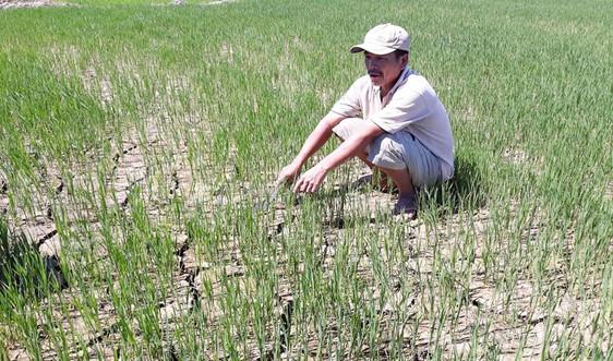 """Thừa Thiên - Huế: Dự án tưới tiêu chậm, ruộng lúa """"khát"""" nước"""