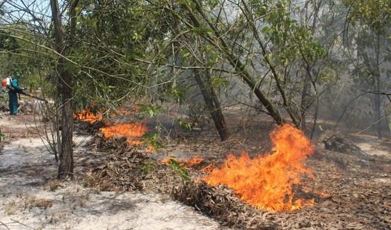 Cháy lớn ở rừng phòng hộ ven biển Quảng Nam