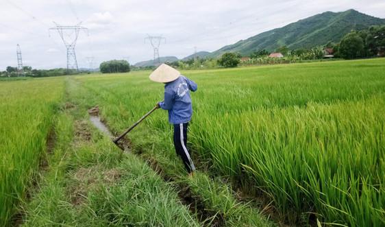 Thừa Thiên Huế: Cấp điện các trạm bơm phục vụ tưới chống hạn vụ Hè Thu