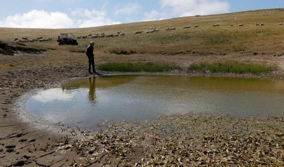 Hạn hán khiến các hồ nước ở phía Tây nước Mỹ cạn kiệt đến mức báo động