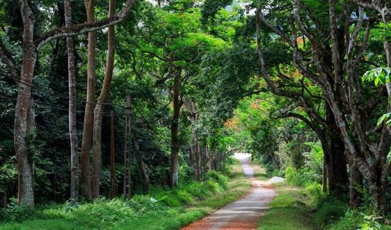 Hà Nội: Tăng cường bảo vệ, phòng cháy rừng