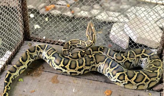 Hà Tĩnh: Tiếp nhận, thả nhiều động vật quý hiếm về Vườn Quốc gia Vũ Quang