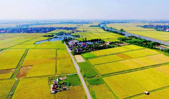 Rà soát chuyển mục đích sử dụng đất trồng lúa, đất rừng để thực hiện dự án