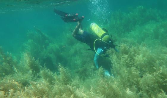 Quan trắc đánh giá rạn san hô và nguồn lợi thủy sản Vịnh Quy Nhơn