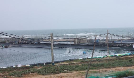Quảng Ngãi: Ô nhiễm môi trường từ nuôi tôm dọc bờ biển