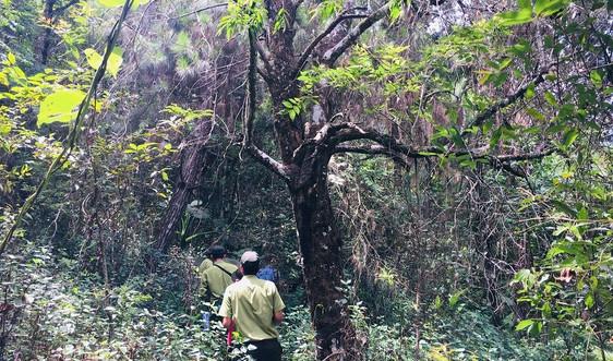 Những người giữ rừng gắn với bảo tồn đa dạng sinh học