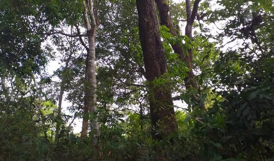 Đồng bào các dân tộc thiểu số Nà Tấu - Điện Biên giữ rừng nhờ chính sách chi trả DVMTR