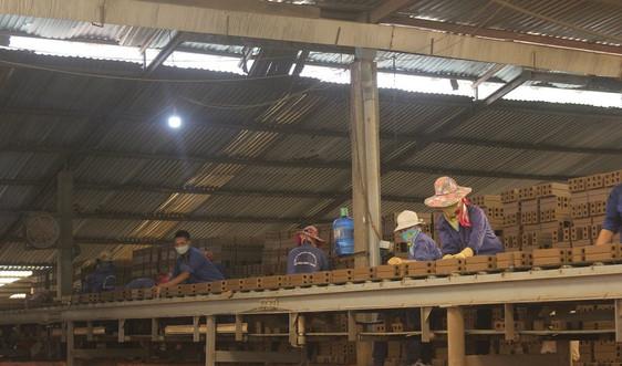 Sơn La: Gia hạn tiền thuế, tiền thuê đất cho 367 doanh nghiệp, cá nhân