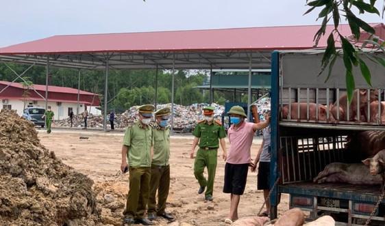 Bắc Giang: Phát hiện, xử lý trường hợp vận chuyển lợn mắc bệnh dịch tả lợn châu Phi
