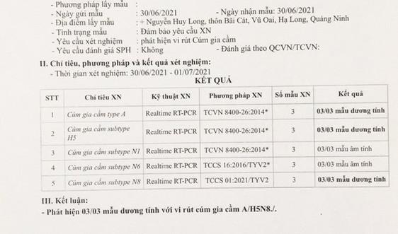 Quảng Ninh xuất hiện chủng cúm gia cầm lần đầu có tại Việt Nam