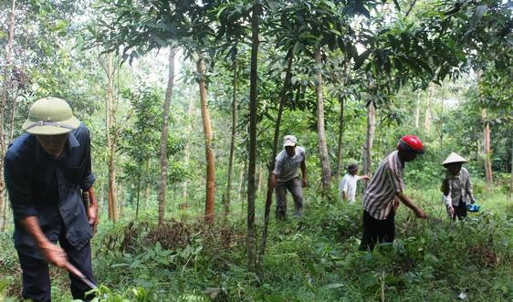 Khu BTTN Mường Nhé: Làm tốt công tác quản lý, bảo vệ, phòng cháy, chữa cháy rừng