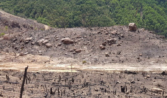 """Quảng Nam: Giật mình chuyện """"cấp nhầm"""" sổ đỏ trên đất rừng tự nhiên"""