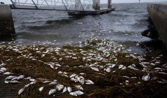 Bão Elsa ở Mỹ khiến ít nhất 3 người thiệt mạng