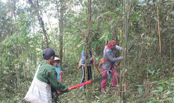 Người dân bản Hua Rốm (Điện Biên) yên tâm giữ rừng
