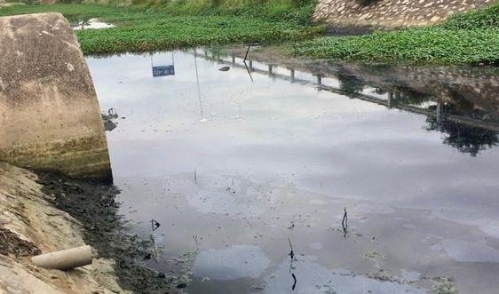 Ninh Bình: Kiên quyết xử lý nghiêm các vi phạm về môi trường