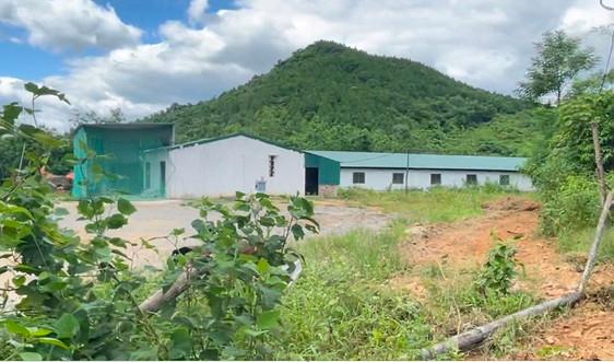 Trang trại heo xây dựng trái phép tại Quảng Bình: Chưa chuyển đổi mục đích sử dụng đất
