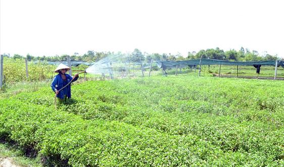Quy hoạch, kế hoạch sử dụng quỹ đất nông nghiệp: Cần có chính sách bảo vệ và phát triển quỹ đất