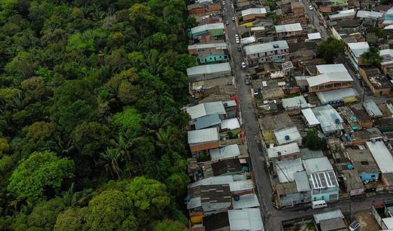 Kế hoạch mới chấm dứt tàn phá hệ sinh thái