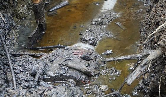 Thanh Hóa: Xử phạt 1,8 tỷ đồng 11 doanh nghiệp vi phạm trong lĩnh vực môi trường