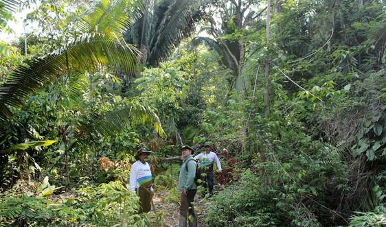 Rừng Amazon bị tàn phá, hơn 10.000 loài động thực vật có nguy cơ tuyệt chủng