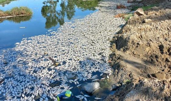 Bao giờ các dòng sông hết bị đầu độc?