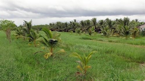 Chuyển mục đích sử dụng đất tại tỉnh Tiền Giang