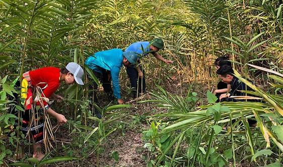 Điện Biên: Các chủ rừng sử dụng hiệu quả nguồn tiền từ dịch vụ môi trường rừng