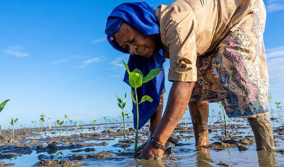 Chung tay hỗ trợ bảo tồn rừng ngập mặn