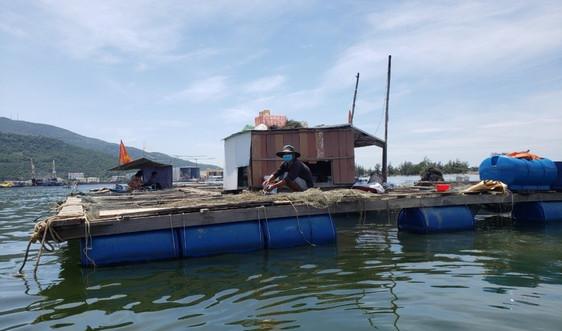 Dân nuôi cá bè ở vịnh Mân Quang lo lắng trước thời điểm di dời