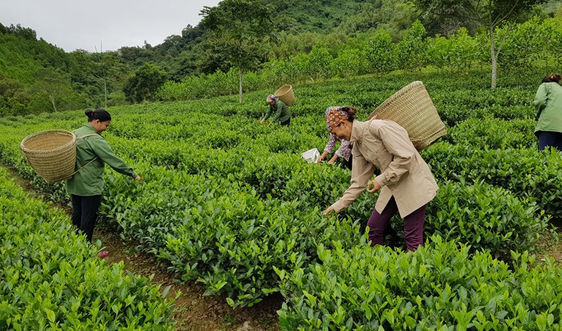 Mức hỗ trợ người dân ổn định đời sống và sản xuất khi thu hồi đất?