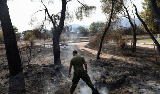 Cháy rừng lan rộng ở Hy Lạp thiêu rụi khoảng 650.000 ha