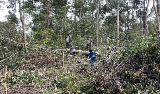 Đắk Nông: Xử phạt 1,5 tỷ đồng các đối tượng phá rừng phòng hộ