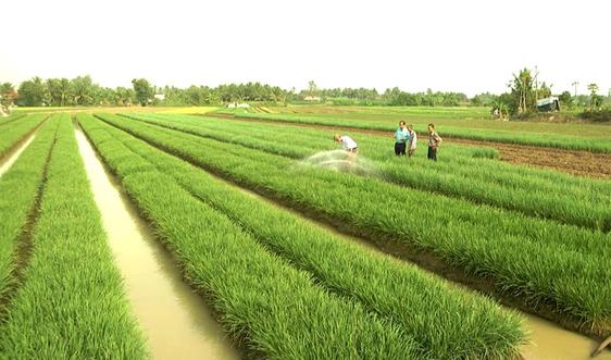 Chuyển mục đích sử dụng đất lúa, đất rừng: Đã có hướng dẫn chi tiết