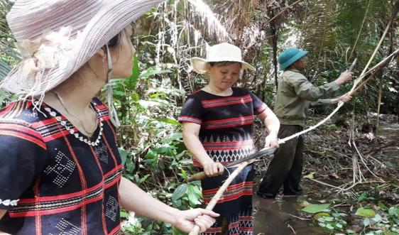 Thừa Thiên - Huế: Đồng bào DTTS giữ rừng, góp phần ứng phó BĐKH