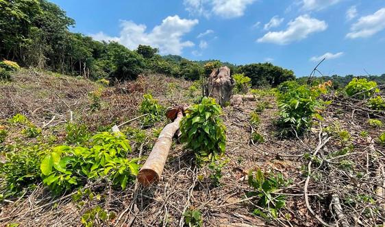 Quảng Bình: Thành lập BQL Dự án Quản lý rừng bền vững và Bảo tồn đa dạng sinh học